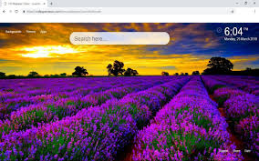 Lavender Blossom Wallpapers Hd New Tab ...