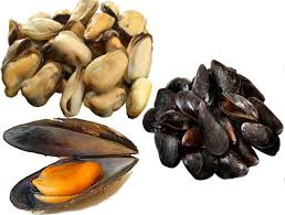 mussels health benefits and nutrition facts