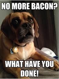 Shocked-Dog-QuickMeme-469x630.jpg via Relatably.com