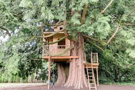 kids tree house. The Main Reason Someone Will Buy This Property May Be Because They Appreciate Work Done By Devon Hughes, Or Expansive 5,540 Square Feet With 5 Kids Tree House