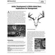 Whitetail Antler Growth Chart Antler Development In White Tailed Deer Implications For