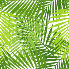 Palm Leaf Pattern Adorable Palm Leaf Seamless Pattern Vector Image Vector Artwork Of