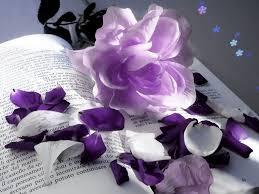 violet flower wallpapers free