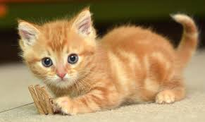 Cute Baby Cats Wallpapers - Wallpaper Cave