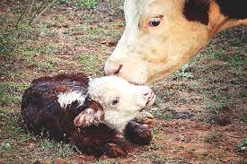 real baby farm animals.  Baby This Live Stream Lets You See Baby Farm Animals The Moment They Enter  World For Real B