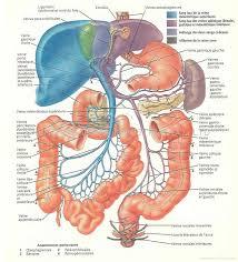 Human Anatomy Chart Labels Human Form Med Term Fall