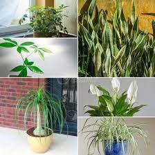 Стайни растения, смъртоносни за кучето ви. 15 Stajni Rasteniya Koito Sa Mnogo Mnogo Trudni Za Ubivane Dori Ot Vas Za Zhenata
