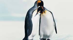 penguin love wallpaper.  Love Penguin Love Inside Wallpaper L