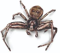 Identify and Get Rid of Spiders in NY and Vermont | Spider Pest ...