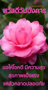 ไอเดีย สวัสดีวันอังคาร 900+ รายการ ในปี 2021 | วันอังคาร, อรุณสวัสดิ์,  ดอกไม้ฤดูใบไม้ผลิ
