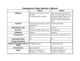 Mitosis And Meiosis Comparison Chart Meiosis V Mitosis Comparison Chart