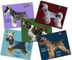 Dog Haircut Chart Dog Grooming Charts Dog Grooming Styles Charts