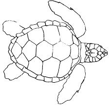 Drawn sea turtle line drawing - Pencil and in color drawn sea ...