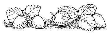 black and white strawberry clipart.  Strawberry Strawberry Cliparts Black 2919271 License Personal Use In And White Clipart F
