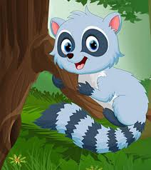 Raccoon Classification Chart 20 Raccoon Facts And Information For Kids To Know