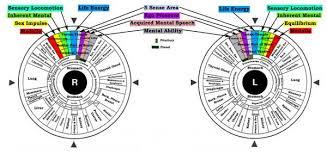 Irisology The Path To Natural Health Tony Koufos