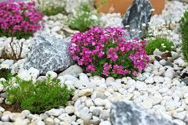 building a rock garden everything you