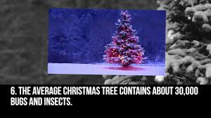 Alan Titchmarsh tips on choosing and care for a real Christmas ...