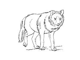 Coloriage Gratuit Le Loup L
