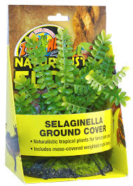 features naturalistic flora selaginella ground cover naturalistic tropical artificial plants