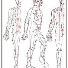 A1 Acupuncture Chart