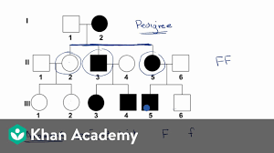 Pedigree Chart Maker Circles And Squares Pedigrees Video Classical Genetics Khan Academy