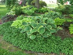 Small Picture Design Ideas for Hosta Gardens Favorite Perennials