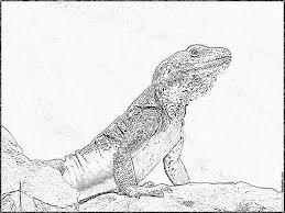 Imprimer Animaux Reptiles L Zard Num Ro 56051