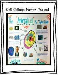 animal cell project poster. Wonderful Cell In Animal Cell Project Poster