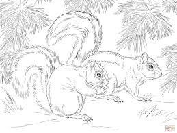 Small Picture Mexican Fox Squirrel coloring page Free Printable Coloring Pages