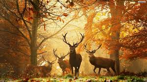 Fall Forest Wallpaper For Desktop