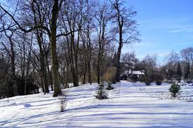 Styczeń 2019 w Ogrodzie - Styczeń - 2019 - Teraz w Ogrodzie... - Informacje  dla zwiedzających - Ogród Botaniczny UMCS - Strona główna UMCS
