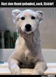 Kurz Den Hund Gebaded Zack Eisbär Lustige Bilder Sprüche