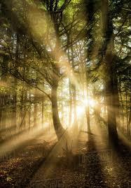 Limpsfield Chart Sunbeams Bursting Through Misty Autumnal Woodland Limpsfield Chart Oxted Surrey D246_38_10062