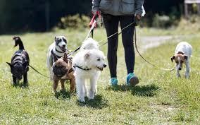La garde d'animaux au domicile du propriétaire. Pet Sitter Ou Nounou Pour Animaux Le Bon Plan De L Ete Le Parisien