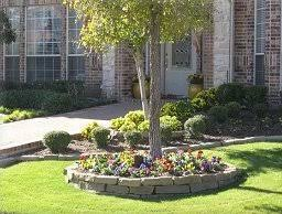 ideas for tree landscaping