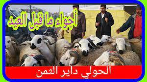 أسعار اضاحي العيد 2021 أسواق الماشية أسواق المغرب - YouTube