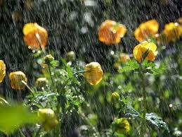 trolleys flowers in the summer rain