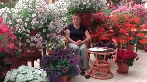 Выращивание <b>петунии</b> из семян часть8 - YouTube