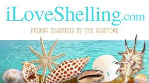 Oyster Identification Chart Seashell Identification Shell Id Identify Sanibel Shell