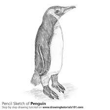 penguin drawings in pencil. Perfect Pencil Penguin Pencil Drawing  How To Sketch Using Pencils   DrawingTutorials101com On Drawings In I