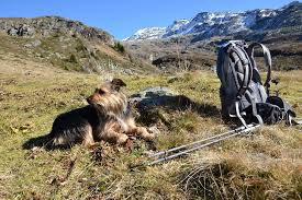 a backpack on the grass a dog and mountains in the background