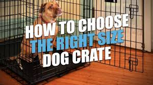 Kong Crate Size Chart Dog Crate Sizes How To Size A Dog Crate For A Perfect Fit