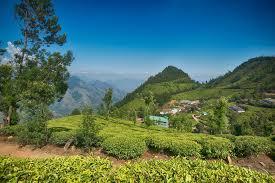 Tea Tourism: 7 Places to Visit India Tea Plantations
