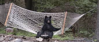 3 Ways To Stay Safe From Wild Animals When You Hammock Camp ...