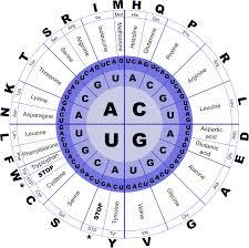 Amino Acid Translation Chart Pin On Harris Integrative Health Nutrition