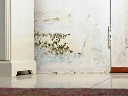 image of black mold in basement health risks