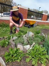 Kitchen Gardeners Growing Gardeners Feast Down East Employee Cultivates Healthy