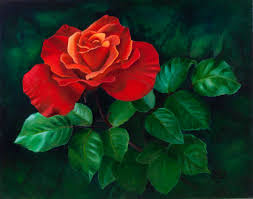 rose painting red rose oil painting on canvas by elena polozova