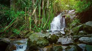 Asian tropical rain forest